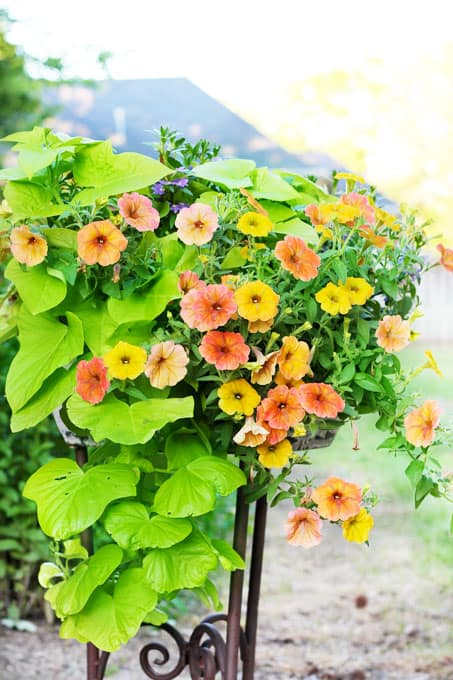 7 Affordable Landscaping Tips, landscaping tips, landscaping, landscaping on a budget, affordable landscaping