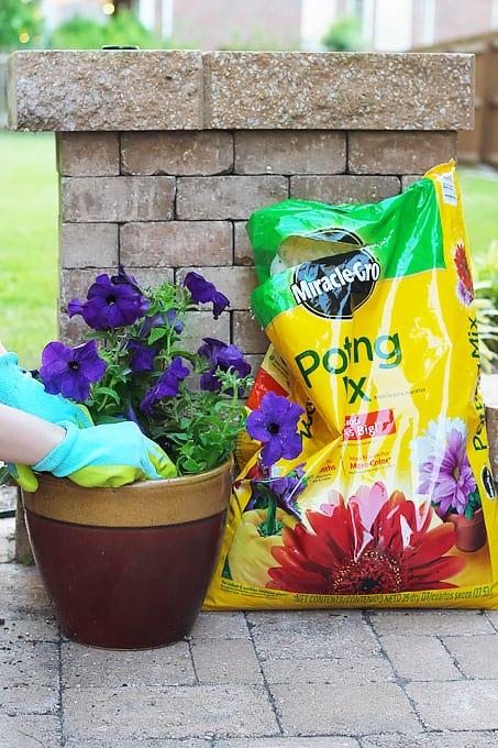 Home - Affordable Landscaping Tips, 7 Affordable landscaping tips, landscaping tips, gardening tips, outdoor diy